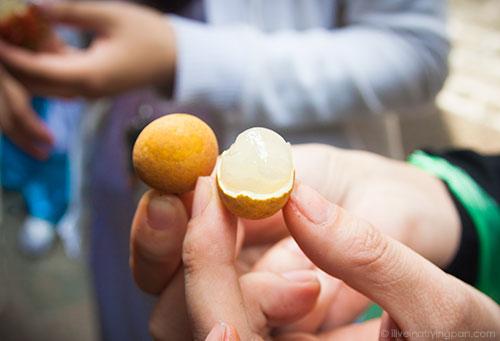 Longan fruit on XO tours