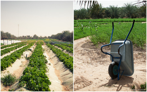 Greenheart Organic Farms - Dubai / Fujairah - © Airspectiv Media