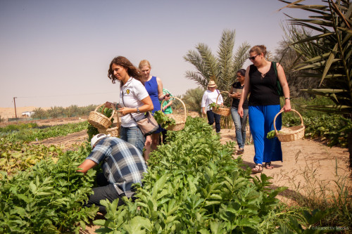 Greenheart Organic Farms - Dubai / Fujairah - Airspectiv Media