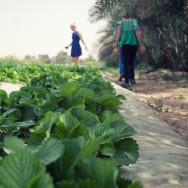 Greenheart Organic Farms - Dubai / Fujairah - Airspectiv Media
