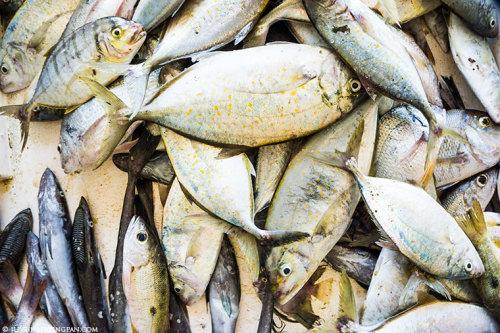 Deira Fish & Vegetable Market - Dubai